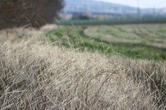 Abstrakter Feldhintergrundrand des Dorfs lizenzfreies stockfoto