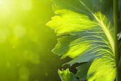 Abstrakter Frühlingsblume Hintergrund Stockfoto