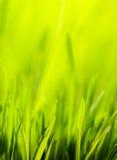 Abstrakter Frühlingsnatur-Grünhintergrund Stockfoto