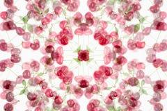 Abstrakter fruchtiger Hintergrund mit einer Kirsche auf einem weißen Hintergrund Stockfotografie