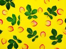 Abstrakter gelber Hintergrund mit den rosafarbenen Blumenblättern Lizenzfreie Stockfotografie