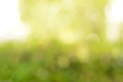 Abstrakter gelber u. grüner Unschärfehintergrund mit Blendenfleckeffekt Stockbild