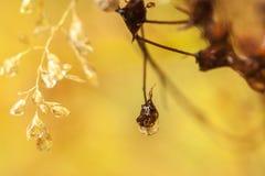 Abstrakter goldener natürlicher Hintergrund Lizenzfreies Stockfoto
