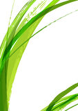 Abstrakter grüner Blattaquarell-Bürstenhintergrund, Vektor templ stock abbildung