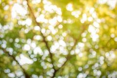 Abstrakter grüner Bokeh Hintergrund Stockbild