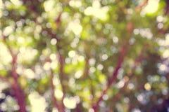 Abstrakter grüner Bokeh Hintergrund Stockfotos
