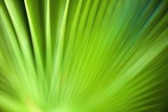 Abstrakter grüner Hintergrund. Stockfoto