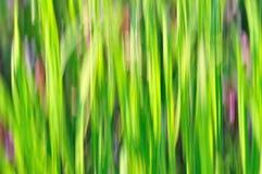 Abstrakter grüner Hintergrund Stockbild