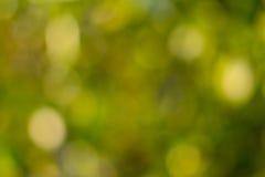 Abstrakter grüner natürlicher bokeh Hintergrund Stockbilder