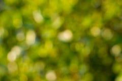Abstrakter grüner natürlicher bokeh Hintergrund Lizenzfreie Stockfotos