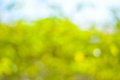 Abstrakter grüner natürlicher bokeh Hintergrund Stockfotos
