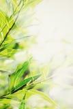 Abstrakter grüner Natur-Hintergrund Lizenzfreie Stockfotos