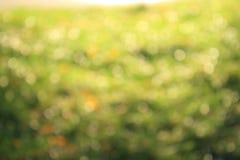 Abstrakter grüner Natur-Hintergrund Lizenzfreie Stockbilder