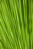 Abstrakter grüner Natur-Hintergrund eines Blattes Lizenzfreie Stockfotografie