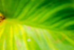 Abstrakter grüner und gelber Hintergrund Stockbilder