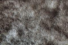Abstrakter grauer Nerzpelzhintergrund (Beschaffenheit) stockfotos