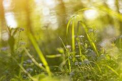 Abstrakter heller unscharfer Hintergrund mit Frühling und kleinen blauen Blumen und Anlagen des Sommers stockbild