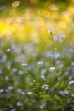 Abstrakter heller unscharfer Hintergrund mit Frühling und Sommer mit kleinen blauen Blumen und Anlagen Mit schönem bokeh im Sonne Lizenzfreies Stockbild