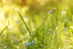 Abstrakter heller unscharfer Naturhintergrund mit Frühlings- und Sommerblumen, Gras und Anlagen stockfotografie