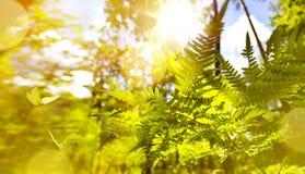 Abstrakter Herbst-Naturhintergrund Septembers sonniger stockfotos