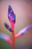 Abstrakter Hintergrund - abstrakte Blumen der Weichzeichnung auf Feldhintergrund Stockbild