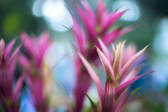 Abstrakter Hintergrund - abstrakte Blumen der Weichzeichnung auf Feldhintergrund Stockbilder