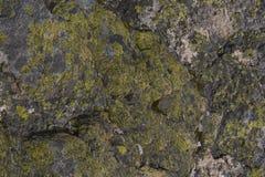 Abstrakter Hintergrund der alpinen Flechten Lizenzfreie Stockfotografie