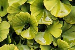 Abstrakter Hintergrund der Blätter Stockbild