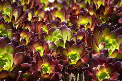 Abstrakter Hintergrund der Blumen Lizenzfreies Stockfoto