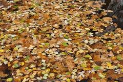 Abstrakter Hintergrund der Herbstblätter Lizenzfreie Stockfotos