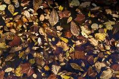 Abstrakter Hintergrund der Herbstblätter Stockfotografie
