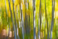 Abstrakter Hintergrund der Natur Stockfotografie