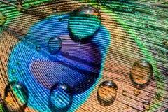 Abstrakter Hintergrund der schönen Vogelpfaufeder mit Wasser fällt Lizenzfreie Stockfotos