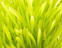 Abstrakter Hintergrund des grünen Grases Lizenzfreie Stockfotos
