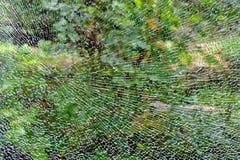 Abstrakter Hintergrund, die Beschaffenheit des defekten gepanzerten Glases auf dem Hintergrund des grünen Waldes lizenzfreie stockfotos