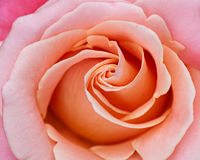 Abstrakter Hintergrund einer Rose stockfoto