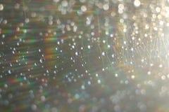 Abstrakter Hintergrund - helle Farbblitze und -strahlen auf Schwarzem Abstrakte Beleuchtungshintergründe für Ihr Design Für Gebra Stockfotografie