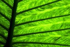 Abstrakter Hintergrund m seine Adern im Licht Lizenzfreie Stockbilder