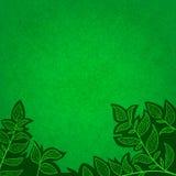 Abstrakter Hintergrund mit Grünblättern und -kratzer Lizenzfreie Abbildung
