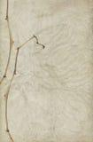Abstrakter Hintergrund und trockener Blumen-Stiel lizenzfreie stockfotos