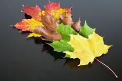 Abstrakter Hintergrund von anders als farbigen Ahornblättern Magische Herbstfarben Lizenzfreie Stockfotografie