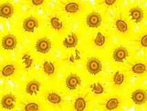Abstrakter Hintergrund von den jungen Sonnenblumen Stockfotografie