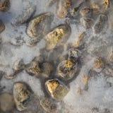 Abstrakter Hintergrund von den Steinen eingefroren unter Seeoberfläche Lizenzfreies Stockfoto