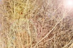 Abstrakter Hintergrund von getrockneten Wildflowers im Sonnenlicht, Weichzeichnung Stockbild