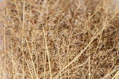 Abstrakter Hintergrund von getrockneten Wildflowers, Weichzeichnung Stockfotos