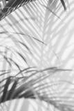 Abstrakter Hintergrund von Schattenpalmblättern auf einer weißen Wand Stockfoto