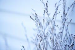 Abstrakter Hintergrund von trockenen Zweigen auf dem Hintergrund des Hauses Stockbilder