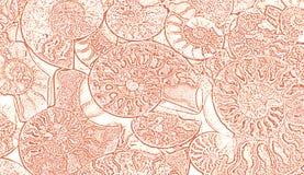 Abstrakter Hintergrund von versteinerten Ammoniten, dekorative Tapete von versteinerten Oberteilen, Druck von den Spiralen von Mu stockfoto