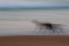 Abstrakter Hund, der mit unscharfer Verschiebenbewegung läuft stockfotografie