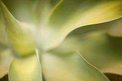 Abstrakter KaktusSucculent lizenzfreies stockbild